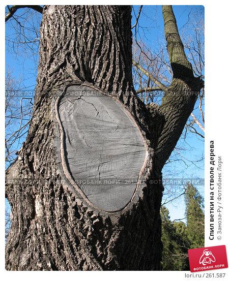 Купить «Спил ветки на стволе дерева», фото № 261587, снято 12 апреля 2008 г. (c) Заноза-Ру / Фотобанк Лори
