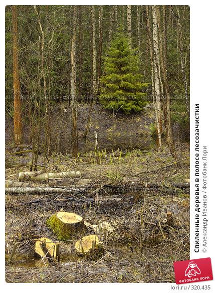 Спиленные деревья в полосе лесозачистки, фото № 320435, снято 30 мая 2017 г. (c) Александр Иванов / Фотобанк Лори