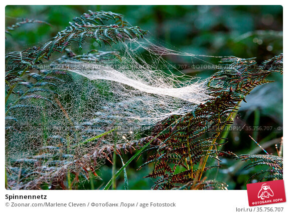 Spinnennetz. Стоковое фото, фотограф Zoonar.com/Marlene Cleven / age Fotostock / Фотобанк Лори