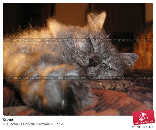 Сплю, фото № 124471, снято 13 октября 2006 г. (c) Анастасия Gorkaia / Фотобанк Лори