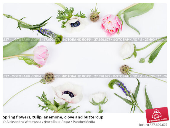 Купить «Spring flowers, tulip, anemone, clove and buttercup», фото № 27690627, снято 24 февраля 2019 г. (c) PantherMedia / Фотобанк Лори