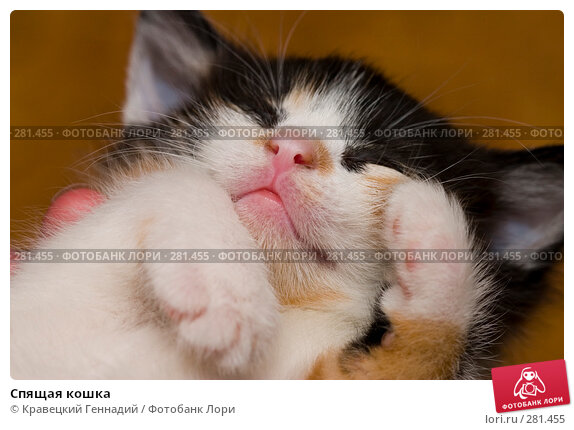 Спящая кошка, фото № 281455, снято 4 апреля 2004 г. (c) Кравецкий Геннадий / Фотобанк Лори