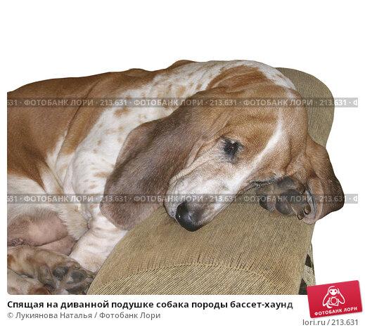 Спящая на диванной подушке собака породы бассет-хаунд, фото № 213631, снято 26 октября 2007 г. (c) Лукиянова Наталья / Фотобанк Лори