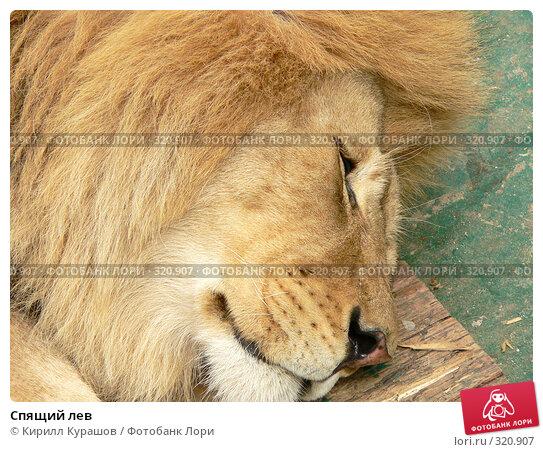 Купить «Спящий лев», фото № 320907, снято 22 мая 2006 г. (c) Кирилл Курашов / Фотобанк Лори