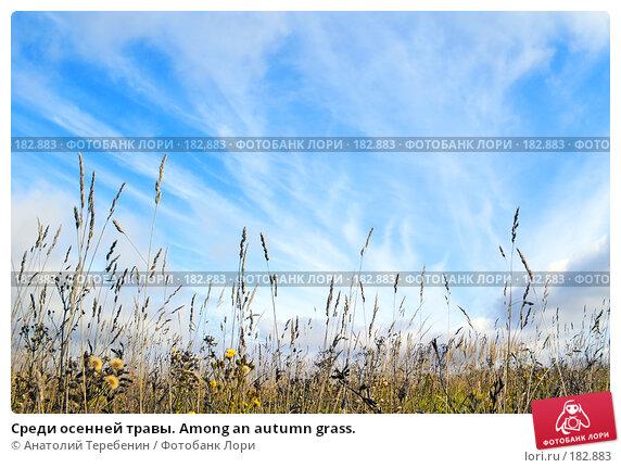 Среди осенней травы. Among an autumn grass., фото № 182883, снято 2 сентября 2007 г. (c) Анатолий Теребенин / Фотобанк Лори