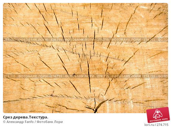 Срез дерева.Текстура., фото № 274715, снято 25 марта 2017 г. (c) Александр Fanfo / Фотобанк Лори