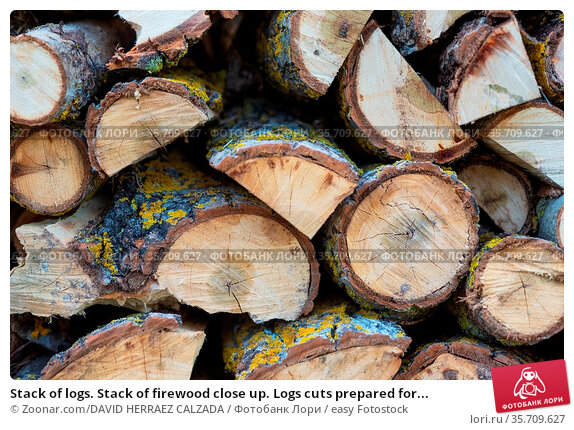 Stack of logs. Stack of firewood close up. Logs cuts prepared for... Стоковое фото, фотограф Zoonar.com/DAVID HERRAEZ CALZADA / easy Fotostock / Фотобанк Лори
