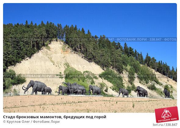Стадо бронзовых мамонтов, бредущих под горой, фото № 338847, снято 23 июня 2008 г. (c) Круглов Олег / Фотобанк Лори