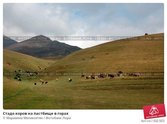 Купить «Стадо коров на пастбище в горах», фото № 332923, снято 5 октября 2007 г. (c) Марианна Меликсетян / Фотобанк Лори