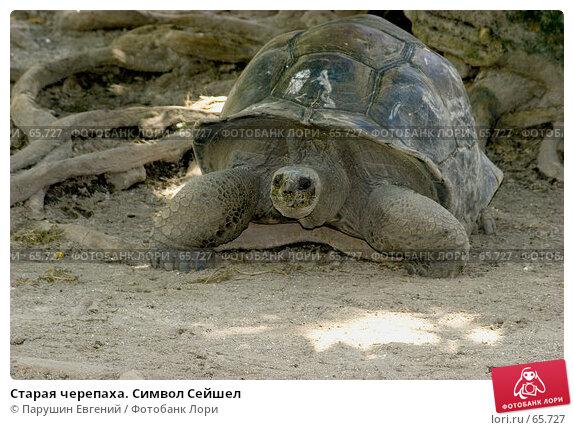 Купить «Старая черепаха. Символ Сейшел», фото № 65727, снято 22 мая 2018 г. (c) Парушин Евгений / Фотобанк Лори