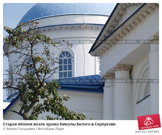 Старая яблоня возле храма Николы Белого в Серпухове, фото № 107691, снято 7 сентября 2007 г. (c) Алина Голышева / Фотобанк Лори