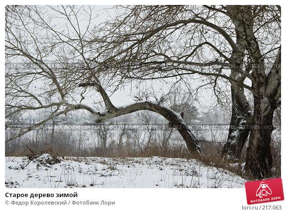 Купить «Старое дерево зимой», фото № 217063, снято 18 февраля 2008 г. (c) Федор Королевский / Фотобанк Лори