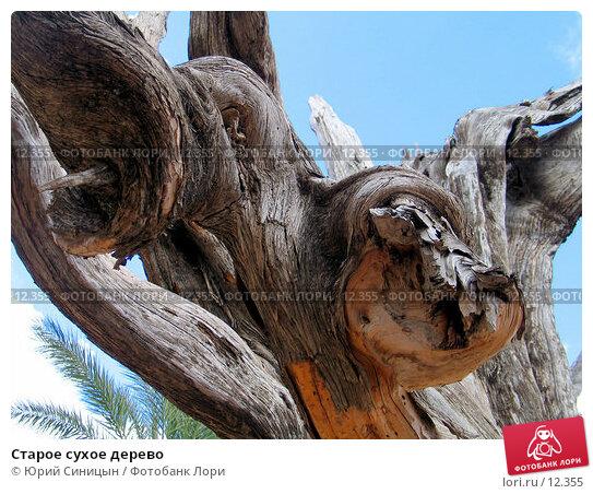 Старое сухое дерево, фото № 12355, снято 29 сентября 2006 г. (c) Юрий Синицын / Фотобанк Лори
