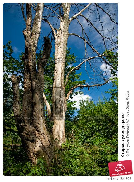 Старое сухое дерево, фото № 154895, снято 1 августа 2007 г. (c) Петухов Геннадий / Фотобанк Лори