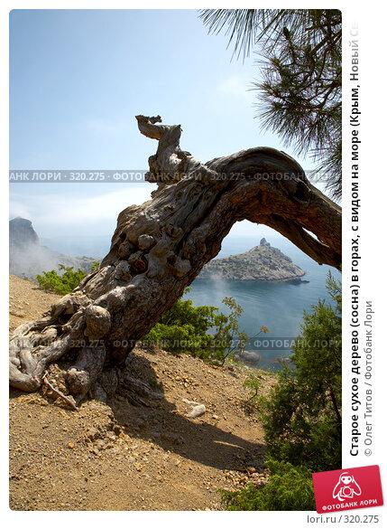 Старое сухое дерево (сосна) в горах, с видом на море (Крым, Новый Свет), фото № 320275, снято 21 мая 2008 г. (c) Олег Титов / Фотобанк Лори