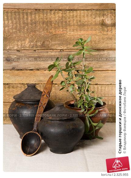 Купить «Старые горшки и денежное дерево», фото № 2325955, снято 5 февраля 2011 г. (c) Владимир Фаевцов / Фотобанк Лори