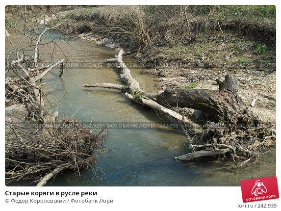 Старые коряги в русле реки, фото № 242939, снято 4 апреля 2008 г. (c) Федор Королевский / Фотобанк Лори