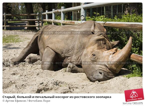 Старый, больной и печальный носорог из ростовского зоопарка, фото № 303075, снято 4 мая 2008 г. (c) Артем Ефимов / Фотобанк Лори