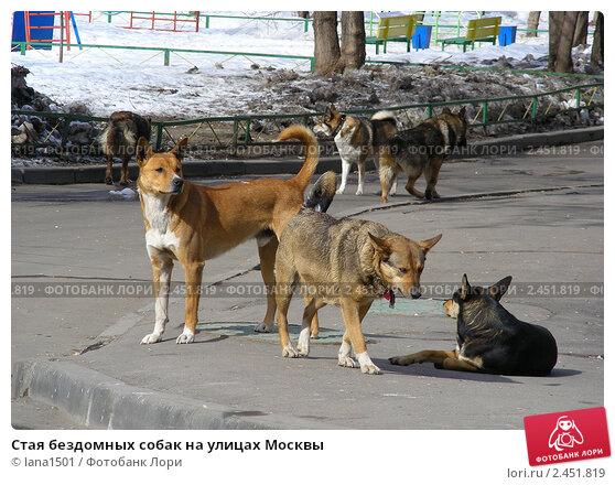 Купить «Стая бездомных собак на улицах Москвы», эксклюзивное фото № 2451819, снято 28 марта 2011 г. (c) lana1501 / Фотобанк Лори