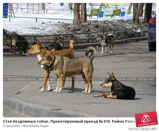 Стая бездомных собак. Проектируемый проезд № 618. Район Раменки. Город Москва. Россия. Стоковое фото, фотограф lana1501 / Фотобанк Лори