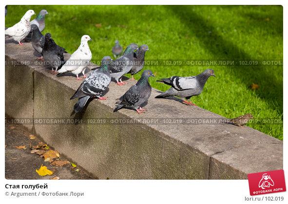 Стая голубей, фото № 102019, снято 20 сентября 2017 г. (c) Argument / Фотобанк Лори