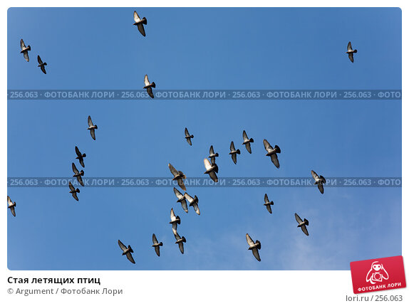 Купить «Стая летящих птиц», фото № 256063, снято 5 апреля 2008 г. (c) Argument / Фотобанк Лори
