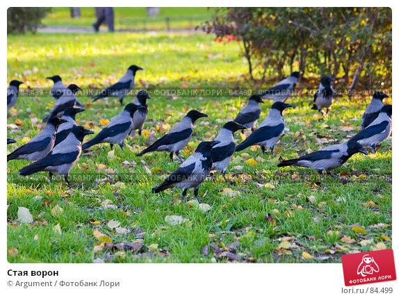 Стая ворон, фото № 84499, снято 18 октября 2006 г. (c) Argument / Фотобанк Лори