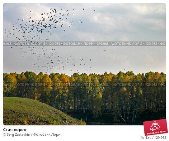 Стая ворон, фото № 129963, снято 19 сентября 2004 г. (c) Serg Zastavkin / Фотобанк Лори