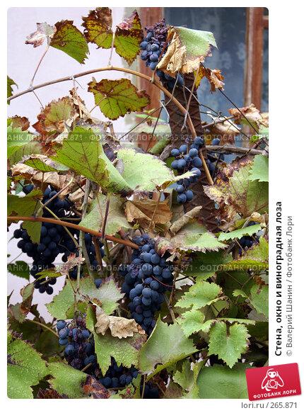 Стена, окно и виноградная лоза, фото № 265871, снято 24 сентября 2007 г. (c) Валерий Шанин / Фотобанк Лори