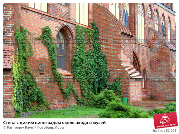 Стена с диким виноградом около входа в музей, фото № 82291, снято 3 сентября 2007 г. (c) Parmenov Pavel / Фотобанк Лори