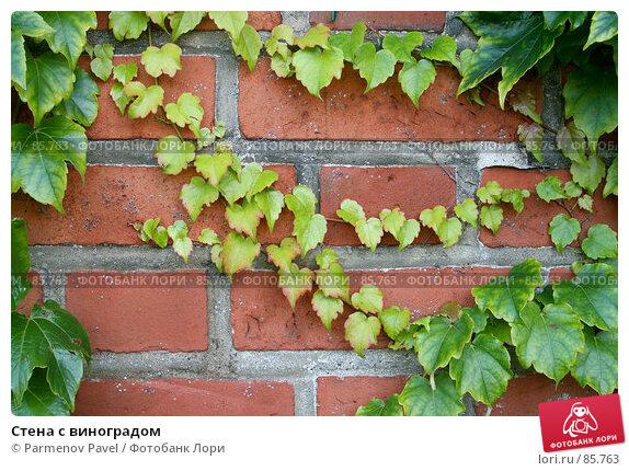 Стена с виноградом, фото № 85763, снято 6 сентября 2007 г. (c) Parmenov Pavel / Фотобанк Лори