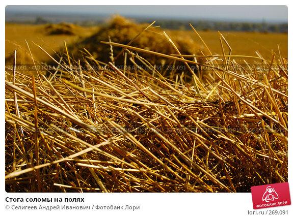 Стога соломы на полях, фото № 269091, снято 18 сентября 2006 г. (c) Селигеев Андрей Иванович / Фотобанк Лори