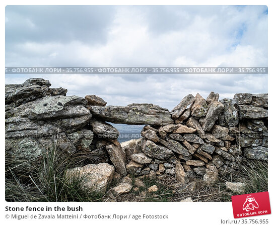 Stone fence in the bush. Стоковое фото, фотограф Miguel de Zavala Matteini / age Fotostock / Фотобанк Лори