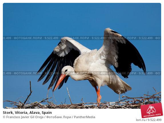 Купить «Stork, Vitoria, Alava, Spain», фото № 9522499, снято 16 февраля 2019 г. (c) PantherMedia / Фотобанк Лори