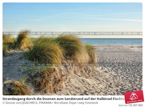 Strandzugang durch die Duenen zum Sandstrand auf der Halbinsel Fischland... Стоковое фото, фотограф Zoonar.com/JOACHIM G. PINKAWA / easy Fotostock / Фотобанк Лори