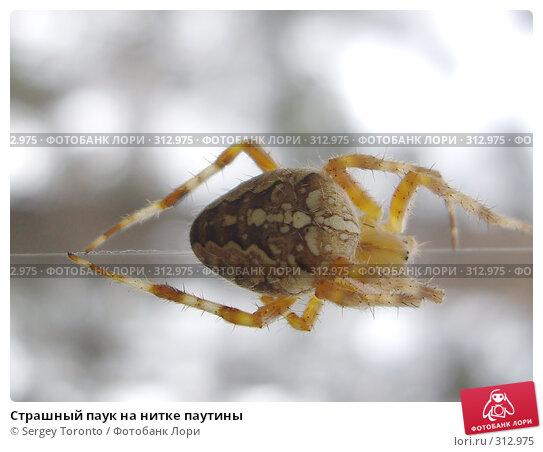 Страшный паук на нитке паутины, фото № 312975, снято 4 августа 2007 г. (c) Sergey Toronto / Фотобанк Лори