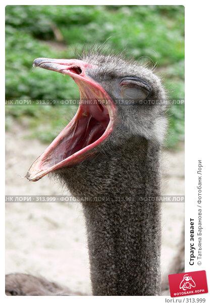 Страус зевает, фото № 313999, снято 22 мая 2008 г. (c) Татьяна Баранова / Фотобанк Лори