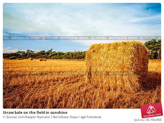 Straw bale on the field in sunshine. Стоковое фото, фотограф Zoonar.com/Kasper Nymann / age Fotostock / Фотобанк Лори