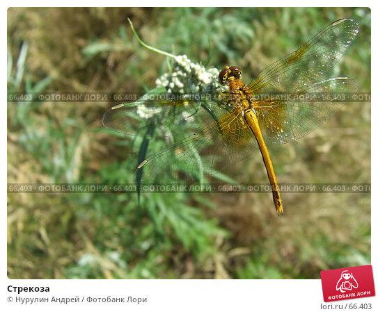 Стрекоза, фото № 66403, снято 29 июля 2007 г. (c) Нурулин Андрей / Фотобанк Лори