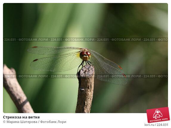 Стрекоза на ветке, фото № 224031, снято 10 августа 2007 г. (c) Марина Шатерова / Фотобанк Лори