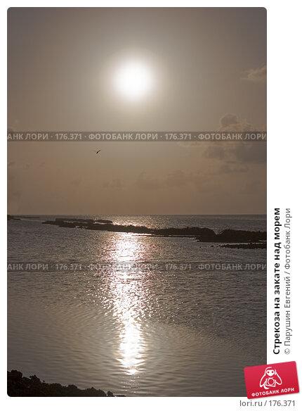 Стрекоза на закате над морем, фото № 176371, снято 19 января 2017 г. (c) Парушин Евгений / Фотобанк Лори