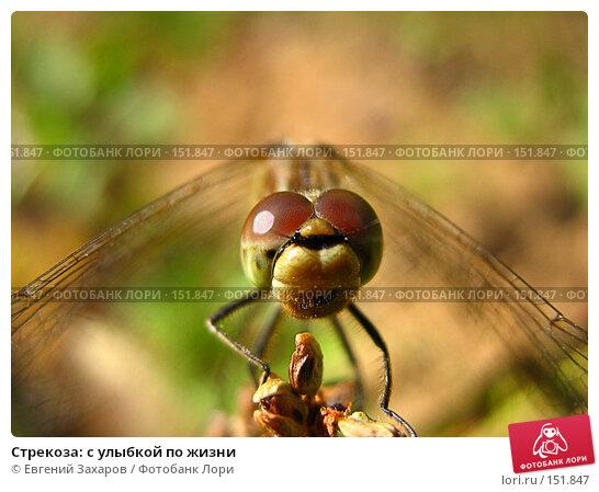 Стрекоза: с улыбкой по жизни, фото № 151847, снято 1 августа 2006 г. (c) Евгений Захаров / Фотобанк Лори