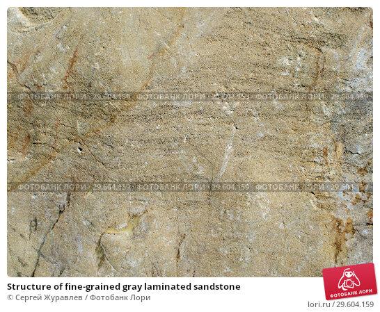 Купить «Structure of fine-grained gray laminated sandstone», фото № 29604159, снято 22 июля 2018 г. (c) Сергей Журавлев / Фотобанк Лори