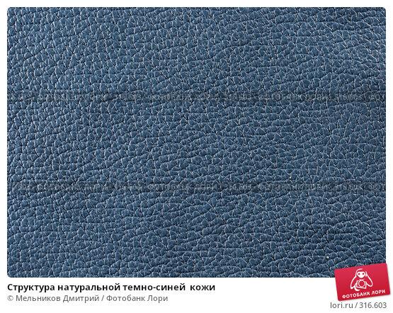 Купить «Структура натуральной темно-синей  кожи», фото № 316603, снято 11 мая 2008 г. (c) Мельников Дмитрий / Фотобанк Лори