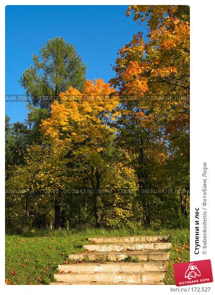 Ступени и лес, фото № 172527, снято 24 сентября 2006 г. (c) Бабенко Денис Юрьевич / Фотобанк Лори