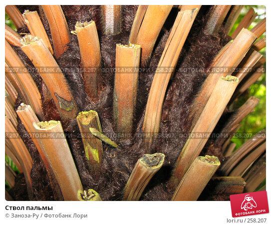 Купить «Ствол пальмы», фото № 258207, снято 12 апреля 2008 г. (c) Заноза-Ру / Фотобанк Лори