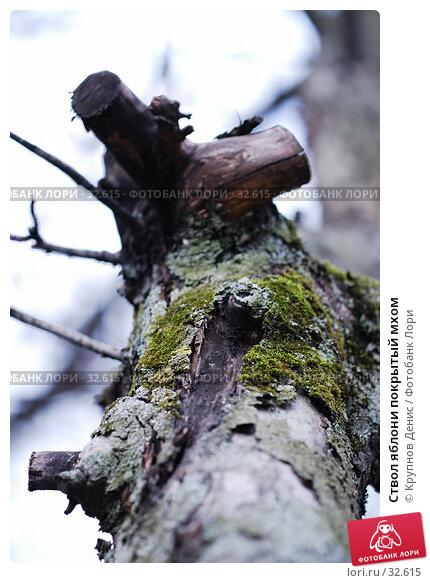Ствол яблони покрытый мхом, фото № 32615, снято 14 марта 2007 г. (c) Крупнов Денис / Фотобанк Лори