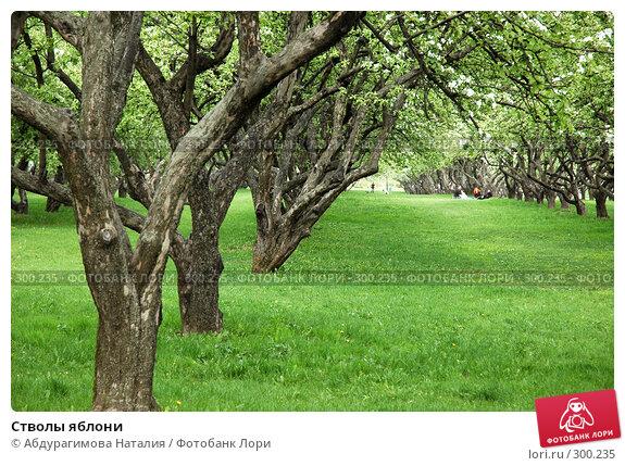 Стволы яблони, фото № 300235, снято 10 мая 2008 г. (c) Абдурагимова Наталия / Фотобанк Лори