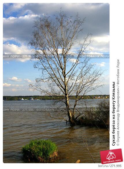 Сухая берёза на берегу Клязьмы, фото № 271995, снято 2 мая 2008 г. (c) Окунев Александр Владимирович / Фотобанк Лори