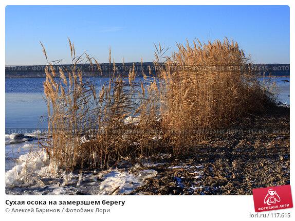 Сухая осока на замерзшем берегу, фото № 117615, снято 11 ноября 2007 г. (c) Алексей Баринов / Фотобанк Лори